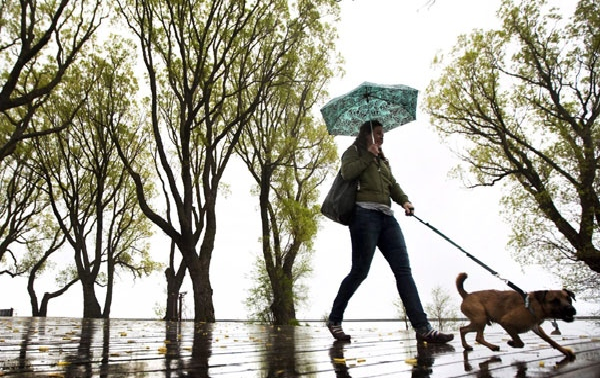 В Канаде собираются ограничить количество собак на выгуле