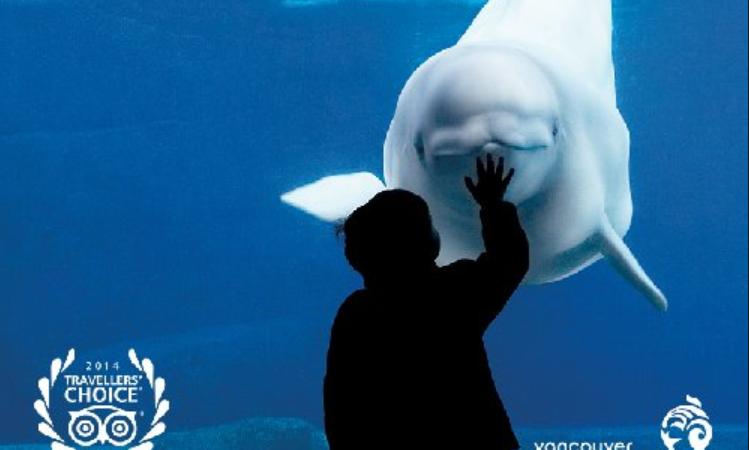 В аквариуме Ванкувера вскоре больше не будет ни китов, ни дельфинов