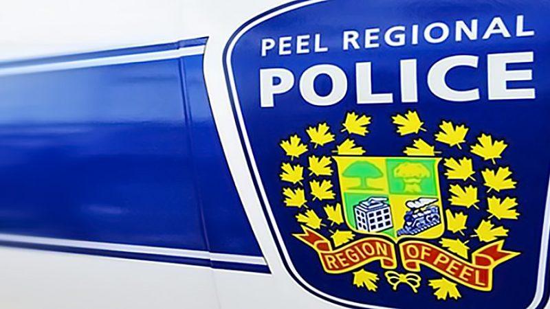 Грабители украли щенков бульдога