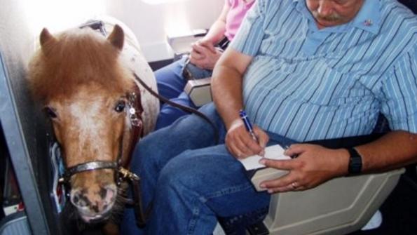 В Air Canada можно провозить только собак. В WestJet— свиней и пони