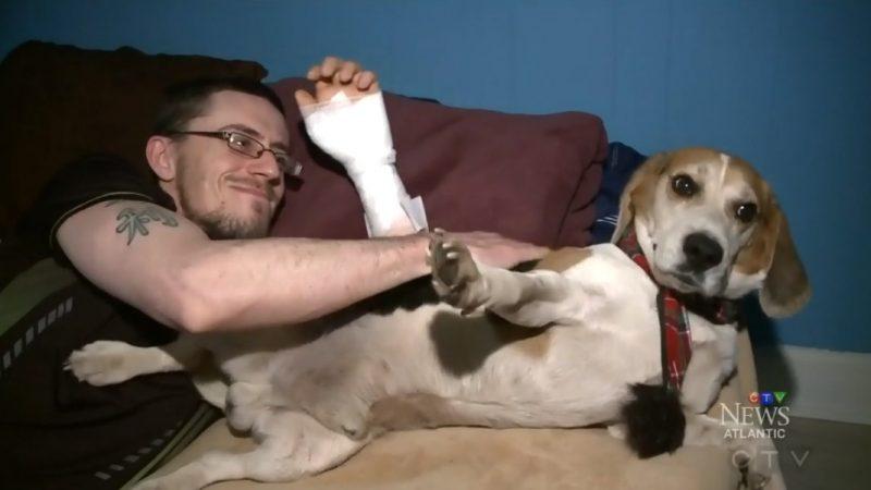 Собака спасла хозяина после аварии