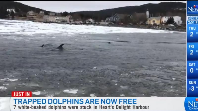 Шеф пожарной службы освободил дельфинов из ледового плена