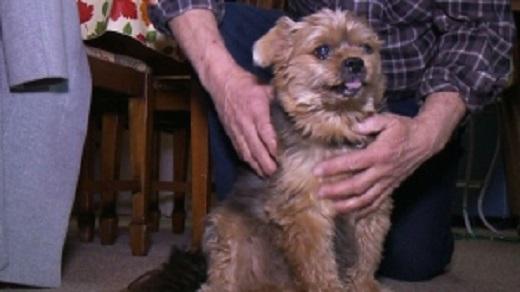 Собака спасла хозяйку от смерти