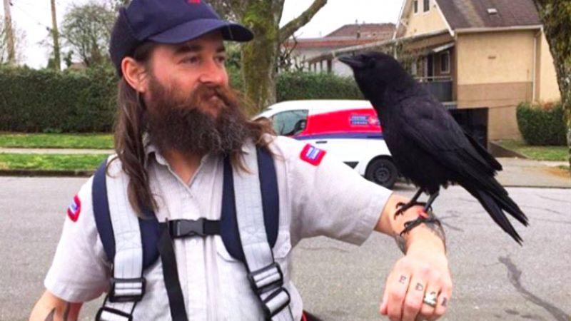 Ворон— друг канадского почтальона