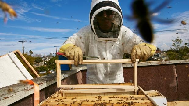Пасеки Онтарио потеряли из-за погоды очень много пчел