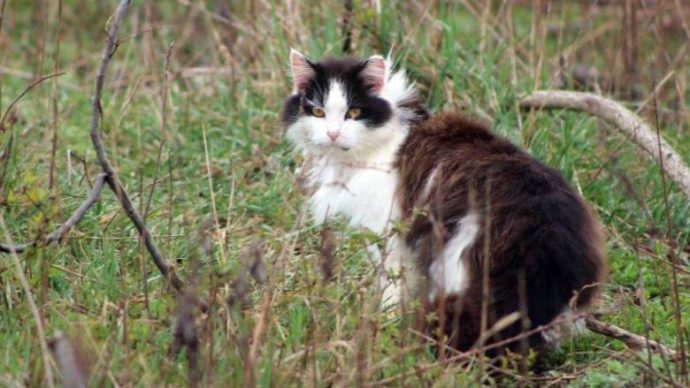 Кошачье перенаселение в Корнуолле: держите их дома