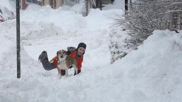 Это Канада, детка: в Онтарио цветет черешня, на Ньюфаундленде— снегопад