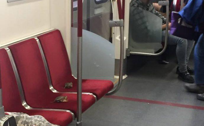 Впервые в торонтской подземке пассажирами стали крабы