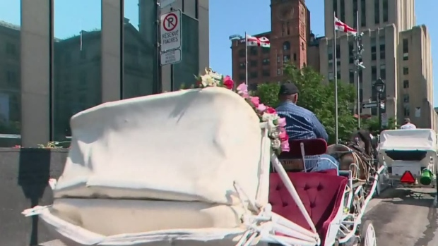 С 2020 года конных экипажей в Монреале больше не будет