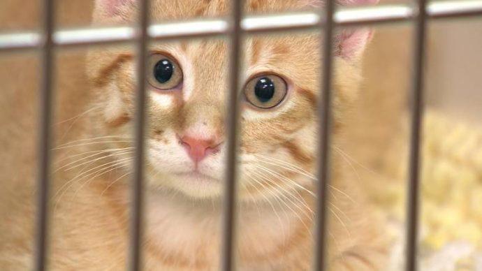 Коты пережили 22-дневное заточение в машине