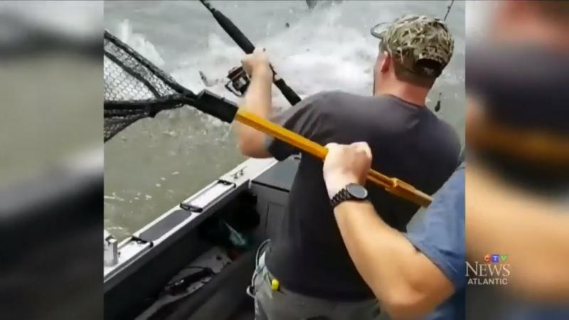 Акула отобрала у канадских рыбаков добычу