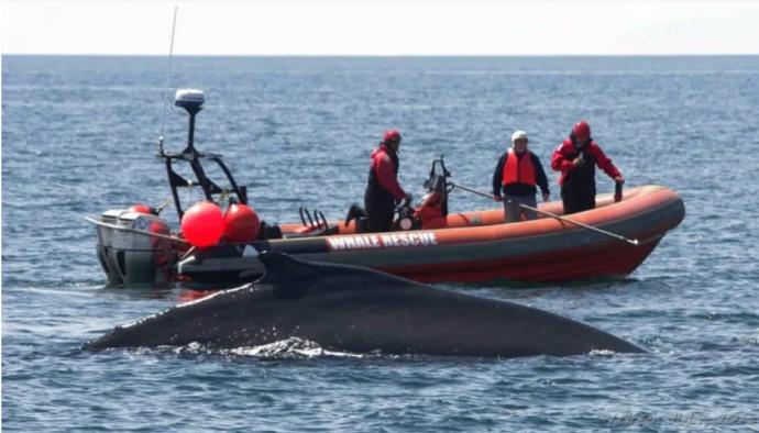 Спасатели ищут на Атлантике кита