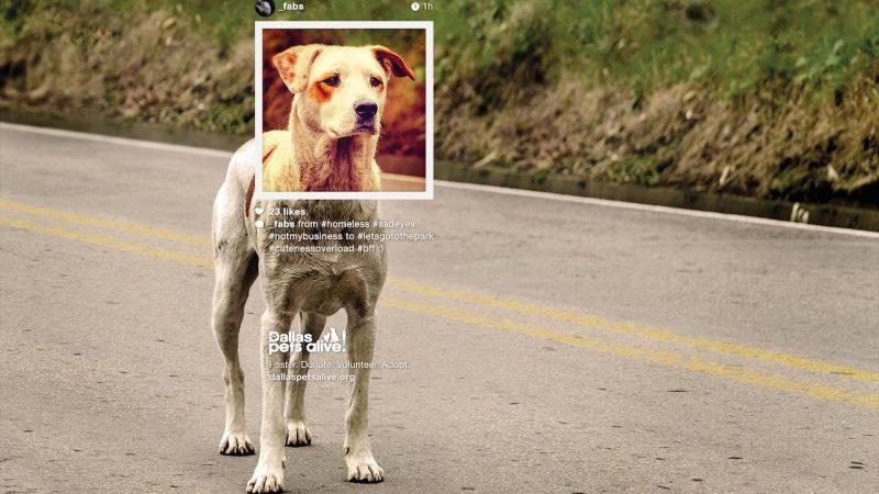 Берете собаку из приюта? Порода не важна