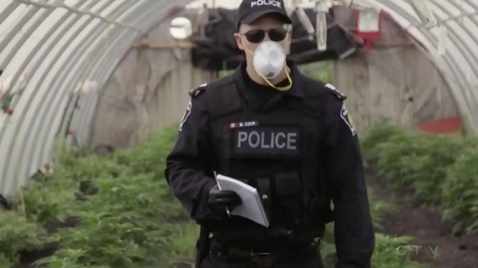 «Марихуановый» арест имеет более экономическую, нежели наркотическую подоплеку