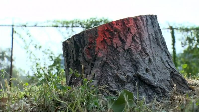 Ради велосипедистов в Монреале срубили 70 деревьев