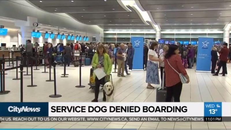 Слабовидящую пассажирку не пустили в самолет с собакой-проводником