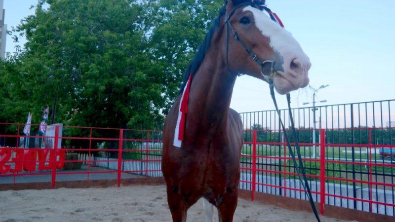 Хозяйка просит вернуть ей любимую лошадь