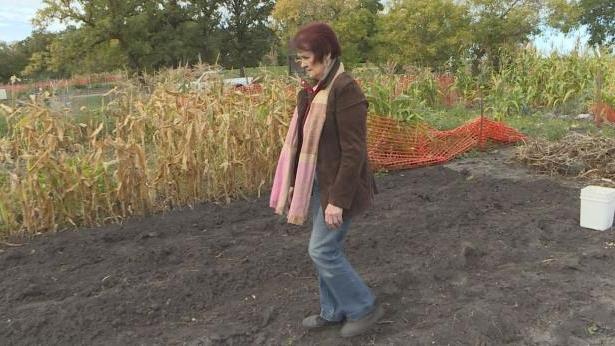 Воры повадились таскать овощи с общественного огорода