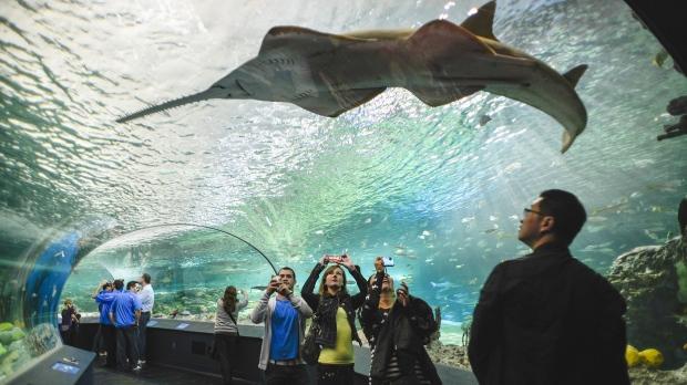 Акулы не атаковали вторгшегося в их владения нагого гостя Аквариума в Торонто