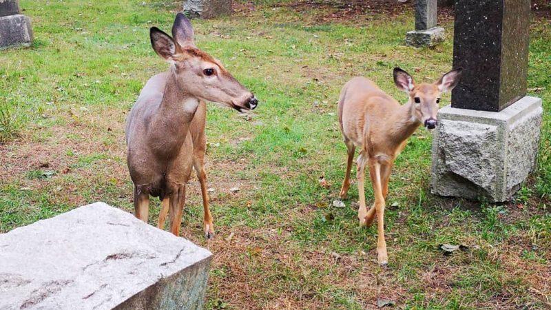 В Новой Шотландии разрешили охотиться на оленей с луками и арбалетами