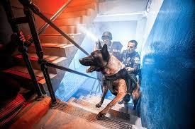 Виннипег переводит вынюхивающих каннабис собак на другую работу
