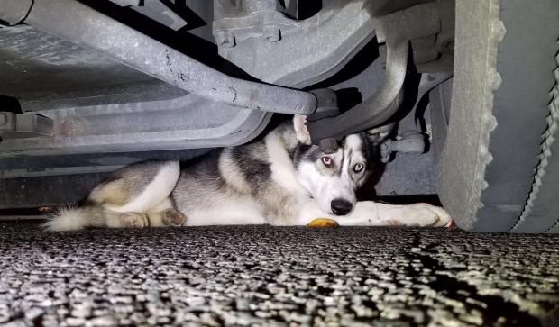 ТТС не может пока найти хозяина попавшей под машину собаки