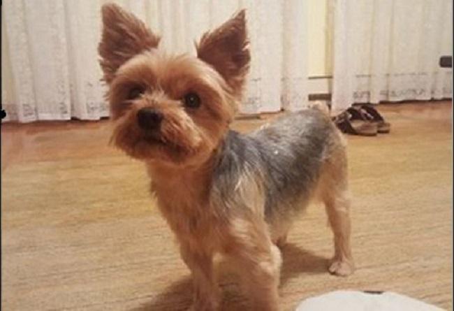 Полиция разыскивает собачку и укравших ее
