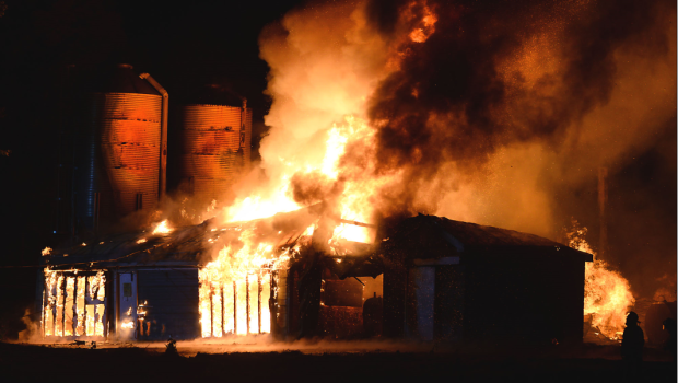 На пожаре в Новой Шотландии сгорели 30 тысяч цыплят