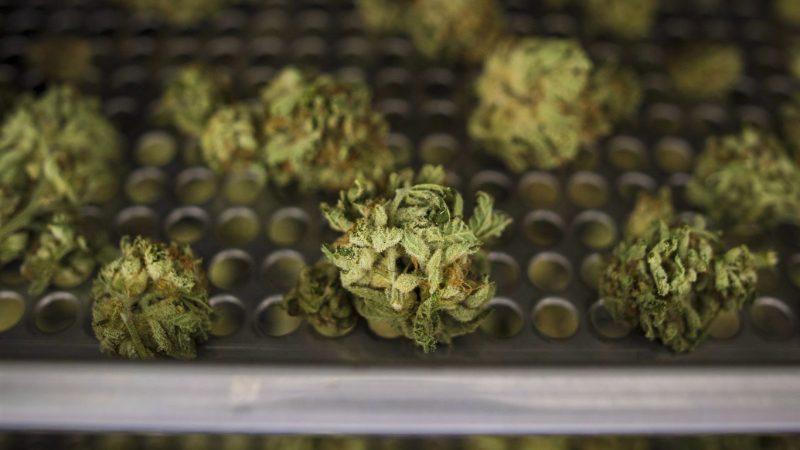 Онлайновый магазин марихуаны в Онтарио: порядка 100 000 заказов за сутки