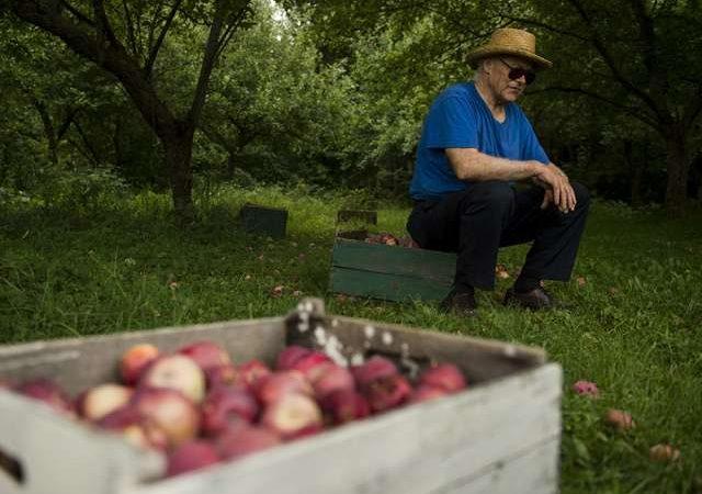Хотите купить место рождения яблок МакИнтош?