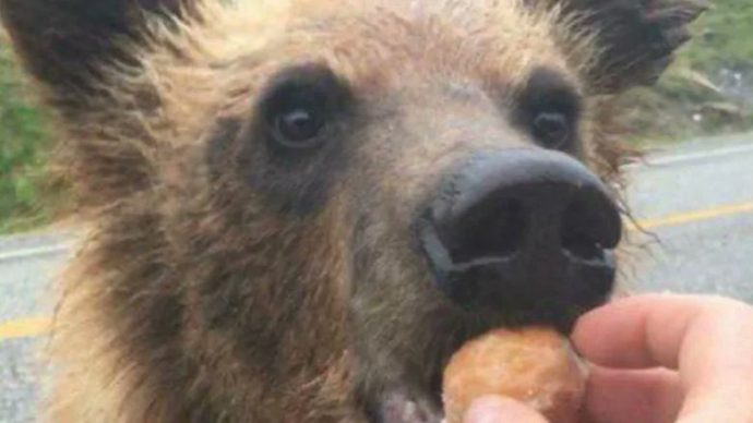В Канаде нельзя кормить диких животных