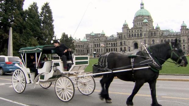В Монреале пала запряженная в экипаж лошадь