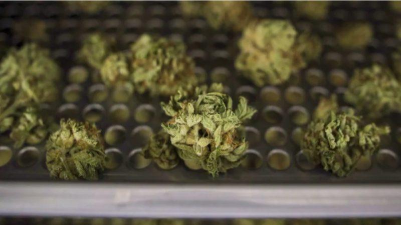 Судьба марихуановых лицензий в Онтарио решится на следующей неделе