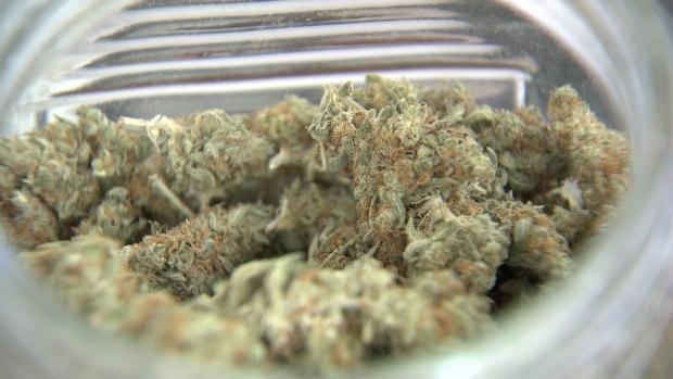 Первый марихуановый отзыв: в экстракте обнаружена плесень