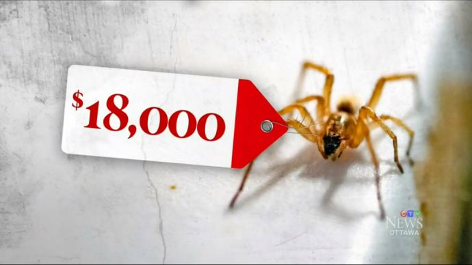 Выкуривание пауков обошлось налогоплательщикам в $18 000