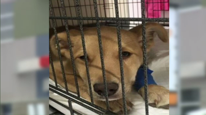 Ветеринары забрали щенка, выставив высокий счет за его лечение