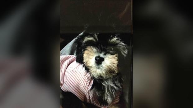 Рождественский подарок: семье вернули украденного щенка