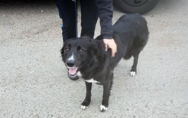 Полиция вернула семье собаку прямо на Рождество
