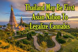 Вслед за Канадой марихуану (медицинскую) легализует Таиланд