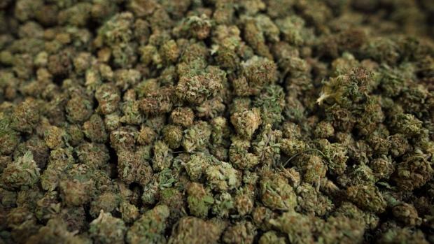 Больше всего в Канаде марихуану любят в Галифаксе