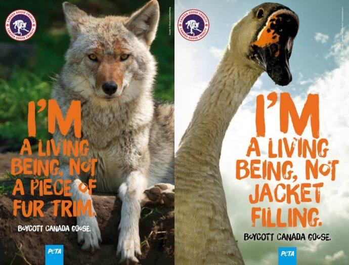 Защитники животных готовы судить Торонто за удаленную рекламу