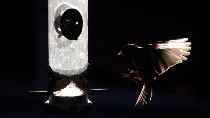 В Банффе планируют запретить птичьи кормушки