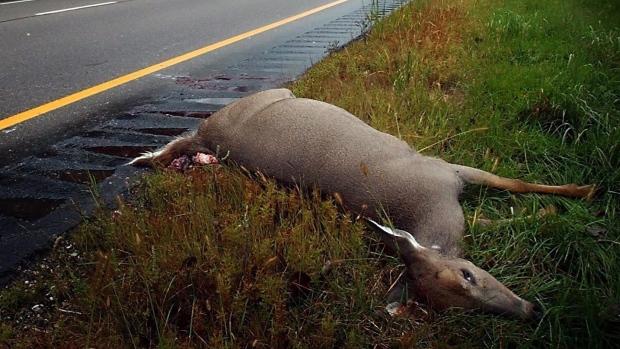 Кое-где в Канаде можно есть сбитых на дороге животных