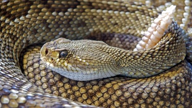 «Змеиный укус». Обвинения через три года после трагедии