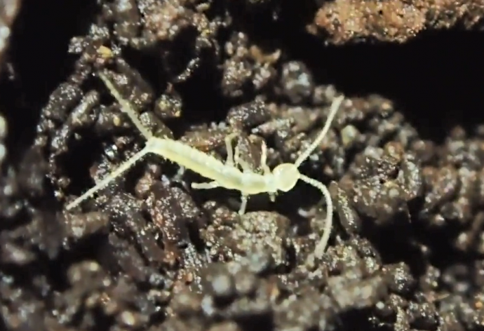 На западе Канады обнаружен новый представитель мира насекомых