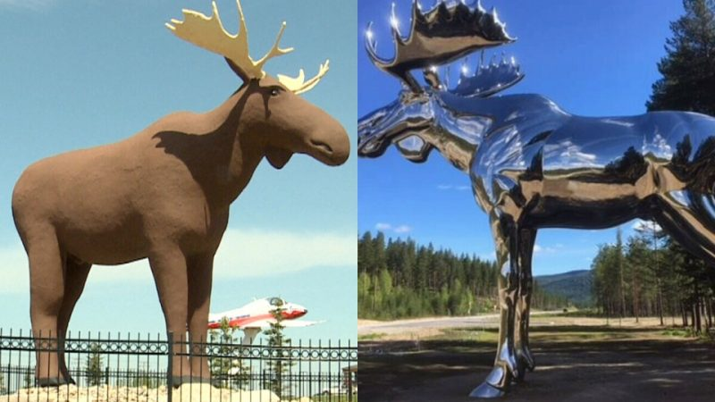 Норвежская гостья хочет поговорить в Канаде о рекордных лосях