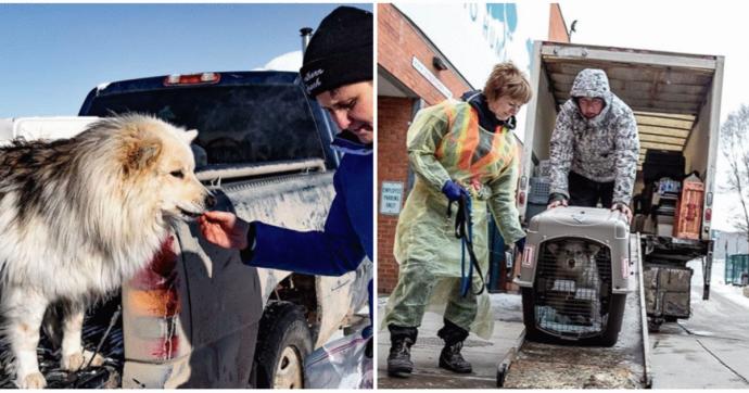 Торонто спасает животных с канадского Севера