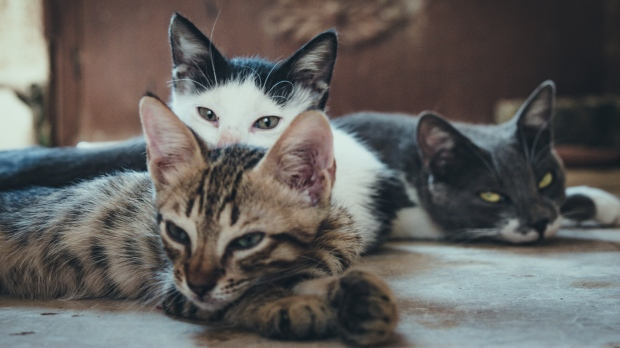 Кошки угрожают животному миру островной природы