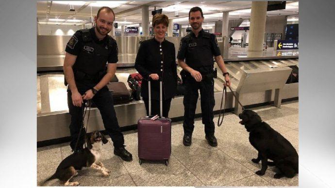 Собаки не пустят в Канаду африканскую свиную лихорадку
