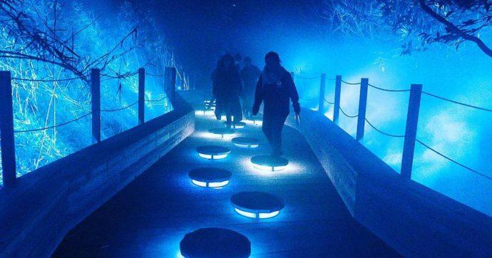 В торонтском зоопарке появится свой световой аттракцион